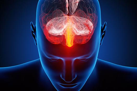 Пересадка мозга — первый шаг к бессмертию?